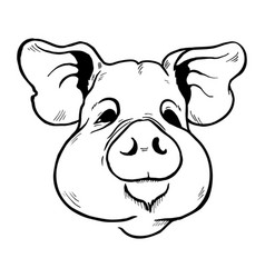 Pig head sketch vector