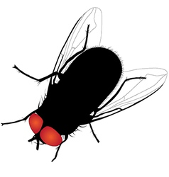 House fly silhouette on white background vector image vector image
