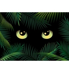 Eyes in the dark vector image