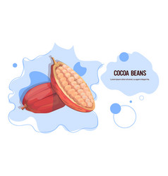 fresh cocoa beans sticker tasty fruit icon healthy vector image