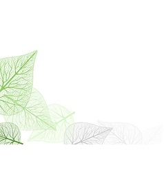 Leaf Venation vector