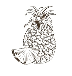 Pineapple in vintage style Line art vector image
