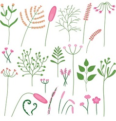 set poaceae and leaves vector image
