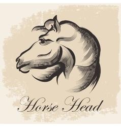Horse Head Sketch vector image vector image