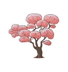 blossoming pink cherry sakura tree vector image