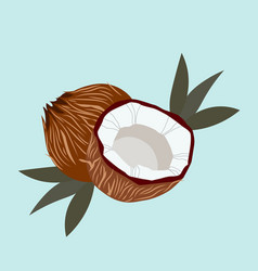 Coconut with palm leaves and blue background vector