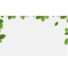 green leaves frame with transparent background vector image