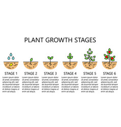 plant growth stages infographics vector image