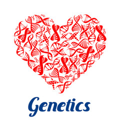 Red heart with dna symbols vector