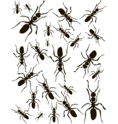 Set Ants Silhouette vector image