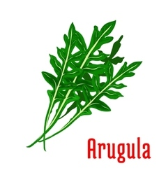 Arugula leafy vegetable icon vector