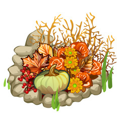 composition of stones pumpkin berries of holly vector image