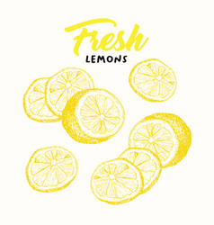 Fresh lemons sketch vector