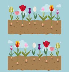 Tulip varieties flat seamless pattern garden vector