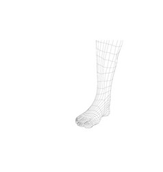wireframe leg close-up view vector image