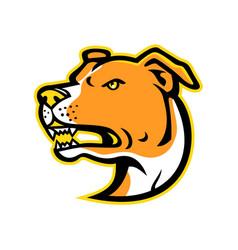 american staffordshire terrier head mascot vector image