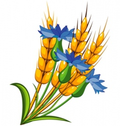 wheat flower vector image vector image