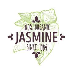 Organic herb jasmine flowers herbal tea and vector