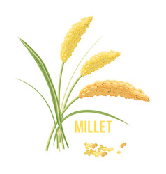 yellow millet isolated on white background vector image