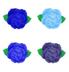 isolated blue rose for decoration vector image