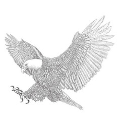 Bald eagle swoop attack sketch black line doodle vector