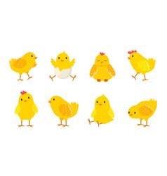 cartoon easter chicks baby farm birds vector image