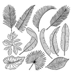 Floral hand drawn pictures of tropical leaves vector
