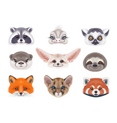 Funny wild animals faces on white vector