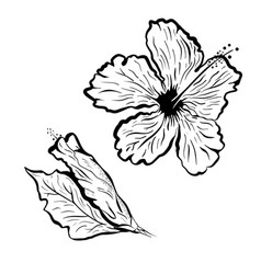 Hibiscus flower in tattoo style black and white vector