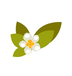 Vanilla flower with green leaves isolated on white vector