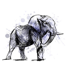 colored hand sketch of an elephant vector image vector image