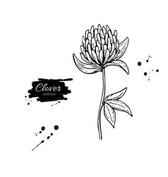 clover flower drawing set isolated wild vector image
