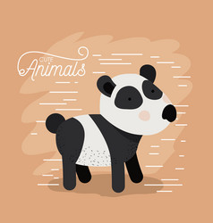 panda bear animal caricature in color background vector image