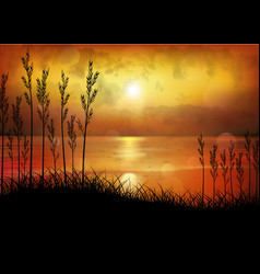 a tropical sunset or sunrise with palm trees vector image
