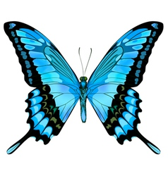 beautiful isolated blue butterfly vector image