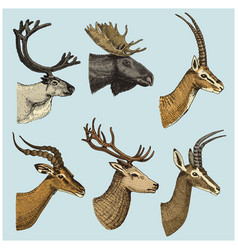 set of horn antlers animals moose or elk with vector image vector image