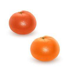 bright set colorful segment juicy orange vector image