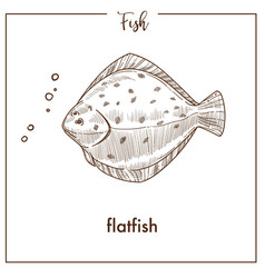 flatfish sketch fish icon of flounder or vector image