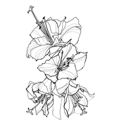 hibiscus pen drawing vector image