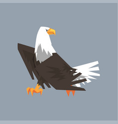 majestic north american bald eagle character vector image