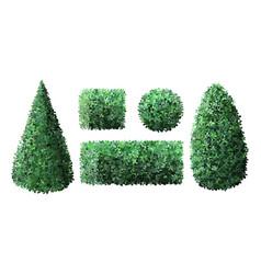 Realistic garden bushes topiary gardener fence vector