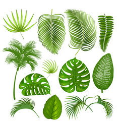 tropical exotic leaves set vector image