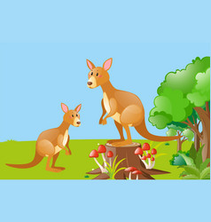 two kangarooes in the field vector image