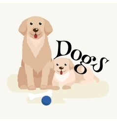 Small puppy and dog on pets background domestic vector image vector image
