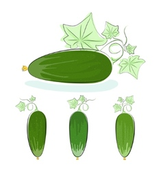 Cucumber vegetable with leaves on a white vector image