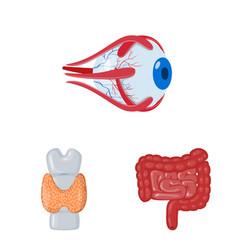 Design anatomy and organ logo set of vector