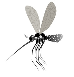 Mosquito white background Zika virus mosquito vector image