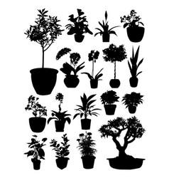 silhouette plants pot vector image