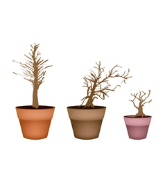 Three Abstract Isometric Brown Trees in Flower Pot vector