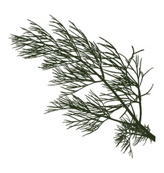 twig of dill vector image vector image